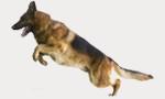 nourrir-mon-chien-de-race.fr