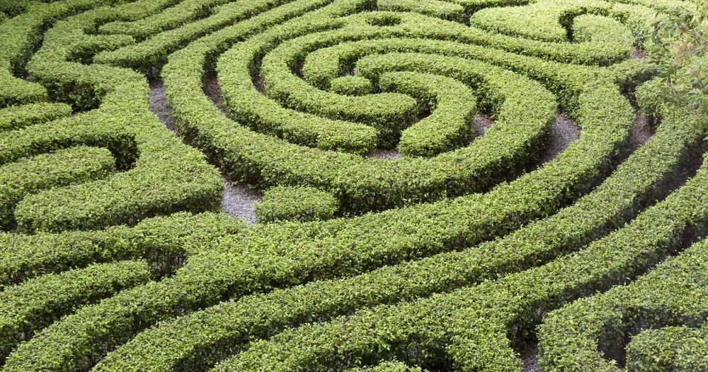 Understanding Pathways to Graduation