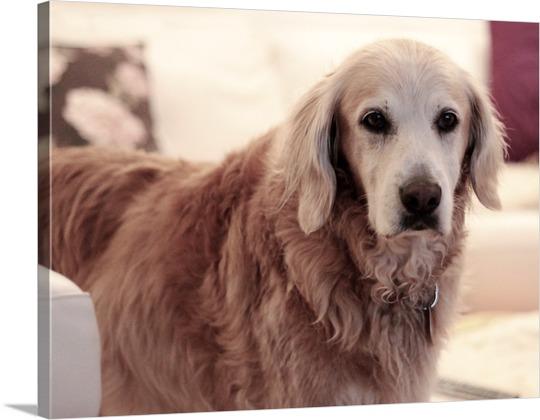 Hundefoto auf Leinwand gedruckt