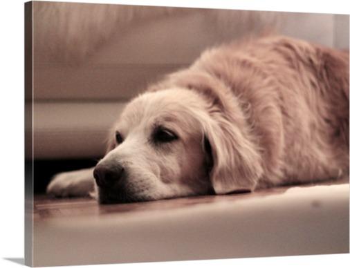 Hundefoto als Leinwanddruck