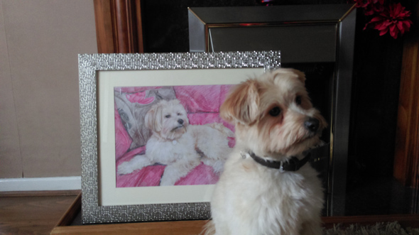 The painting of my dog was a Christmas gift for my wife, the likeness to my dog was great and all the family love the picture thanks.