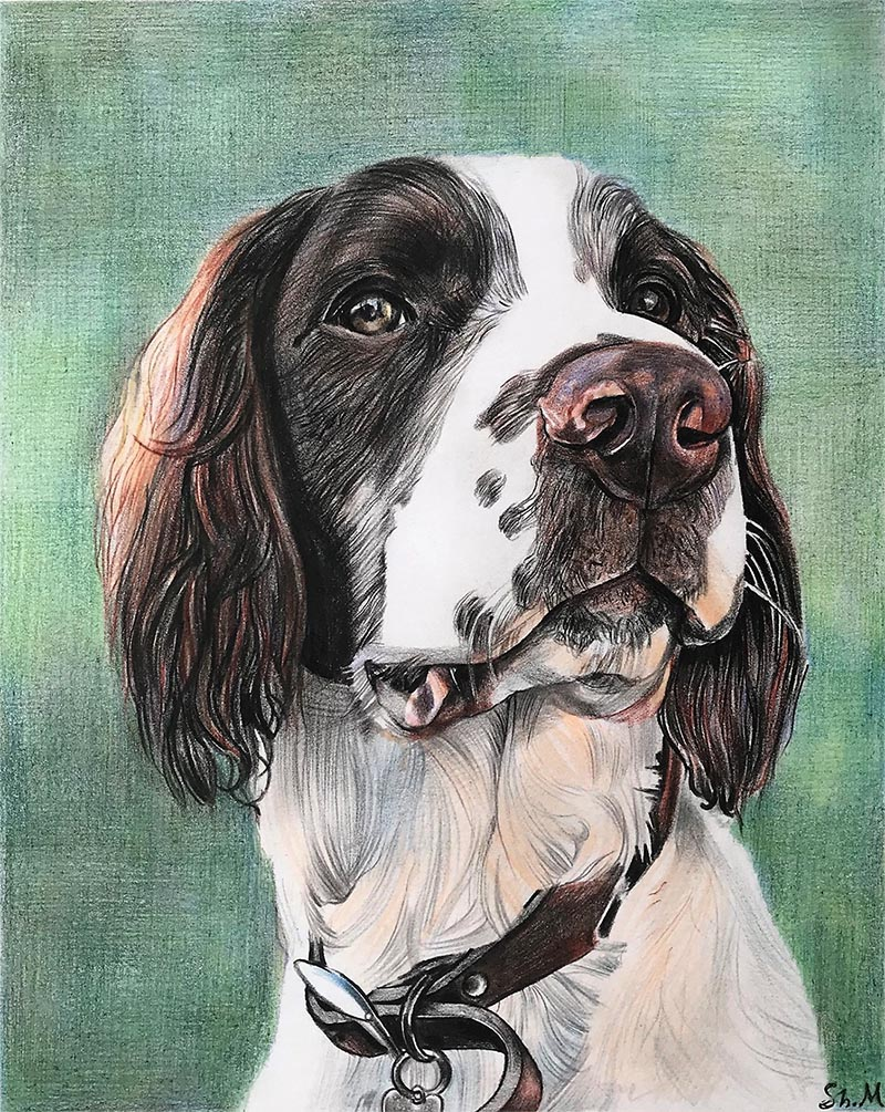 custom colored pencil portrait of man's best friend