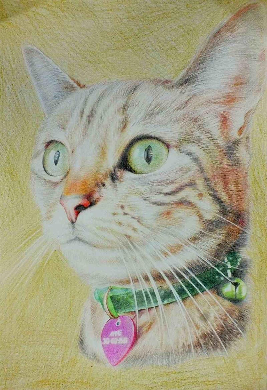 cat portraits on canvas