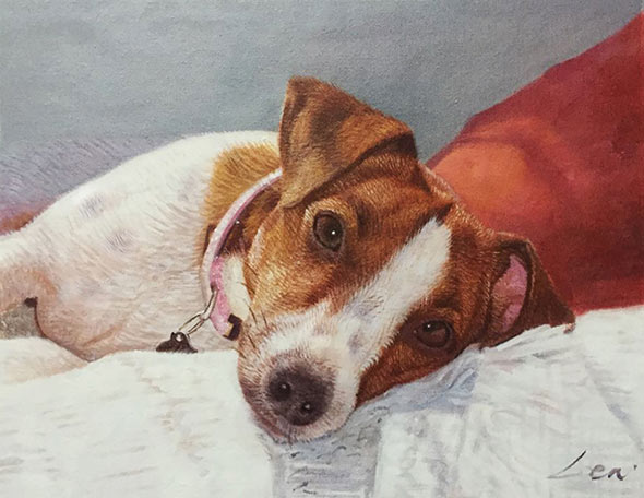 lovely dog portrait