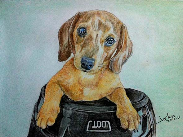 custom colored pencil drawing of a brown Dachshund
