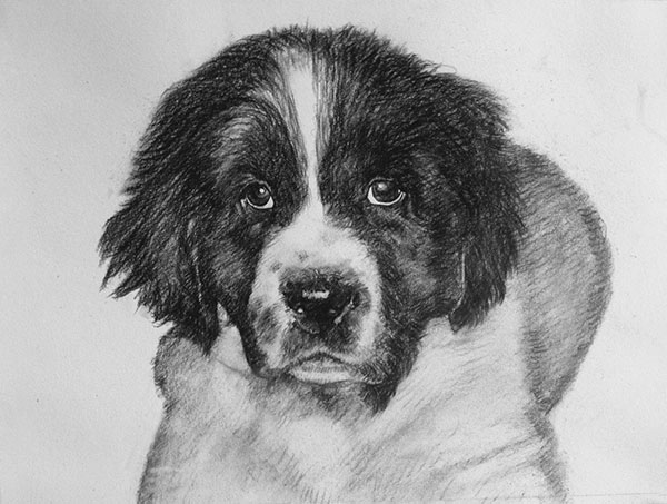 charcoal painting of a dog