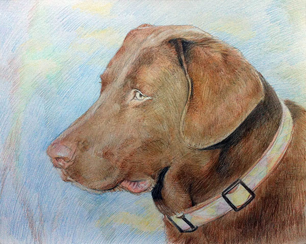 custom colored pencil drawing of a brown Labrador Retriever