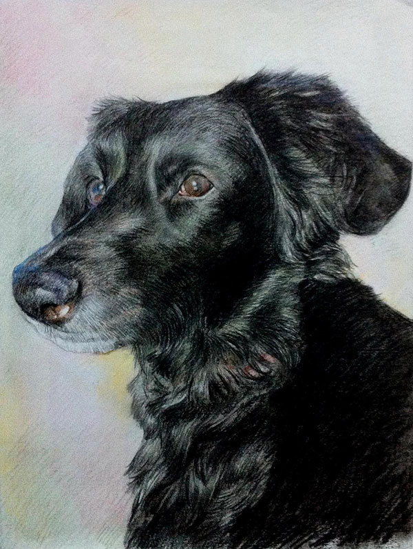 custom colored pencil drawing of a black mutt posing