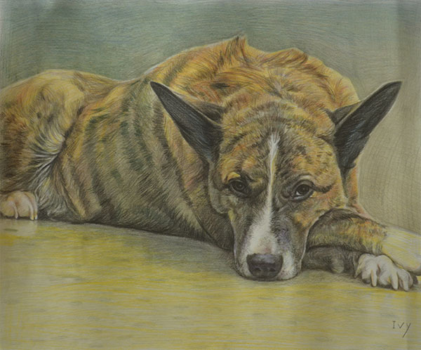 custom colored pencil drawing of a mutt laying down