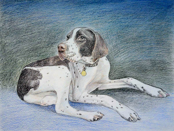custom colored pencil drawing of a French Pointer