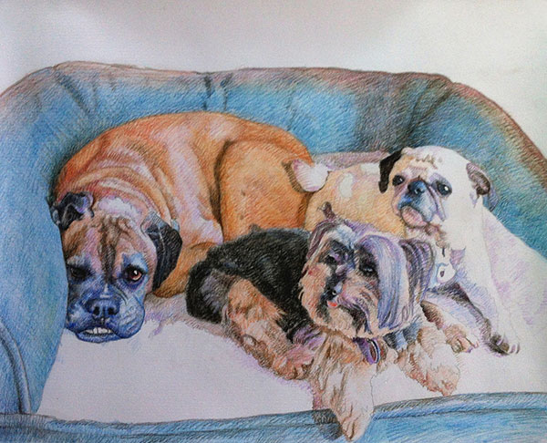 custom colored pencil drawing of three dogs