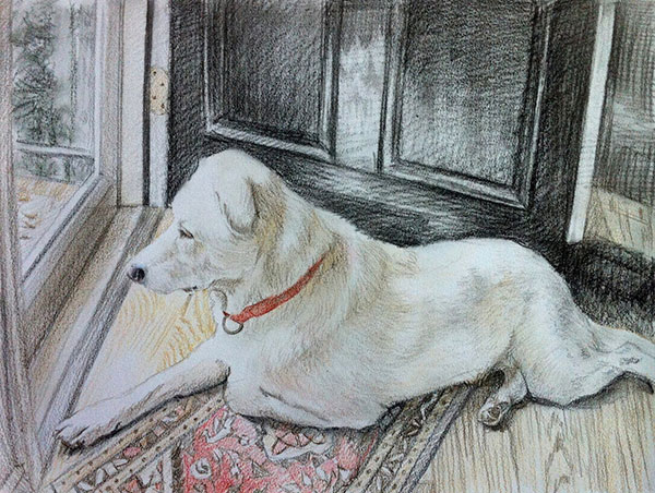 colored pencil drawing of a white dog laying near door