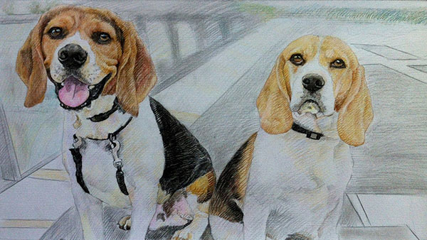 I bought this as a present for my friend. I won`t be there when she opens it but I know she is going to love it. The artist has captured the personalities of her two beagles and has done a fantastic job. I`ll definitely be ordering again