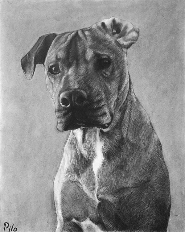 dog portrait online