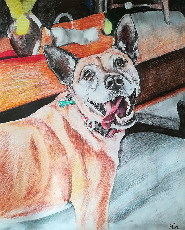 custom colored pencil portrait of silly dog