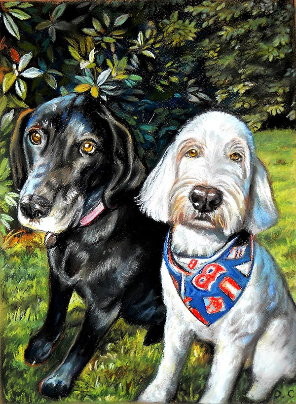 two dogs portrait in pastel