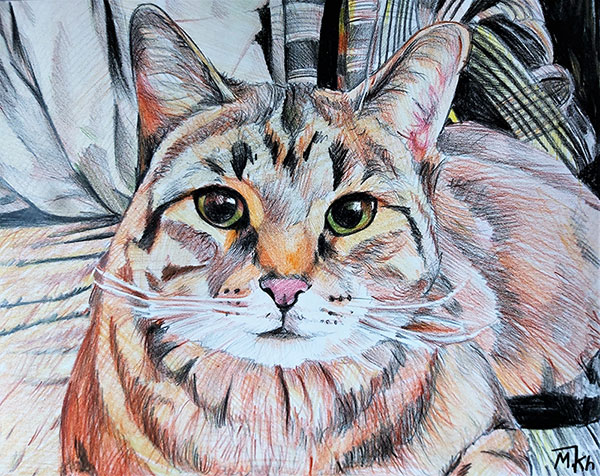 custom colored pencil of long haired cat with green eyes