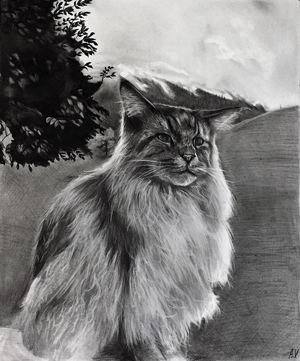 picture to charcoal cat drawing