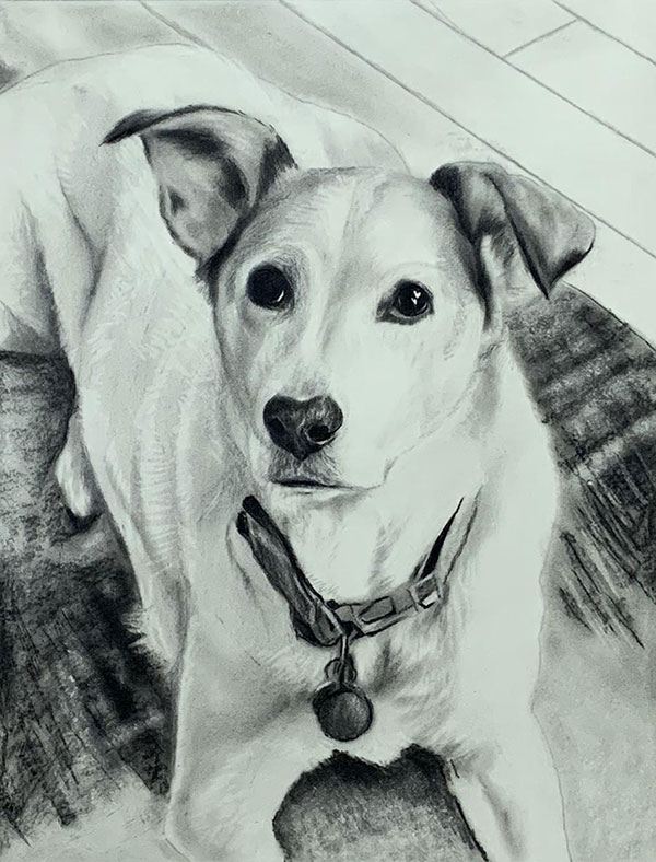 dog charcoal drawing