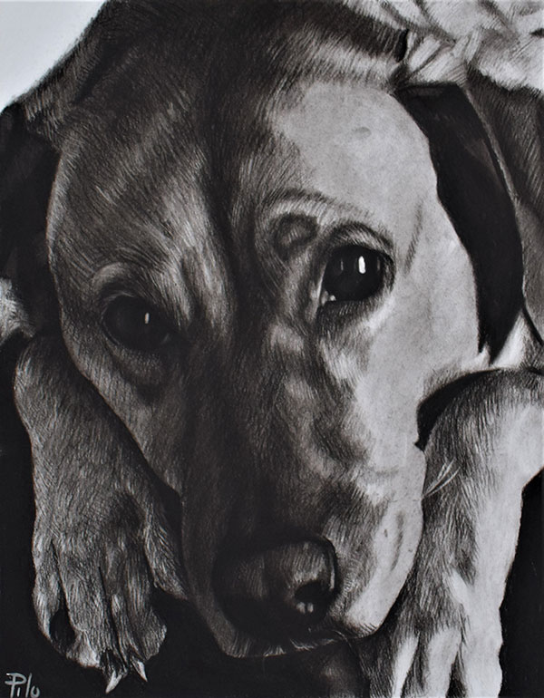 Close up charcoal portrait of a dog and paws