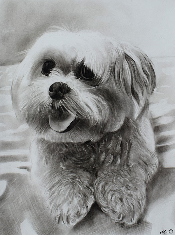 personalized charcoal drawing of white dog