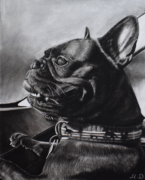 picture to realistic charcoal painting happy black pug