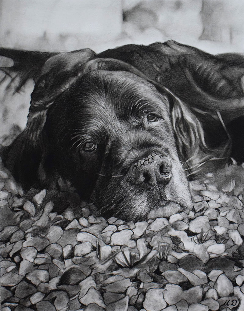 photo realistic charcoal drawing of black dog