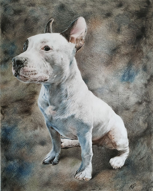 custom colored pencil drawing of white dog