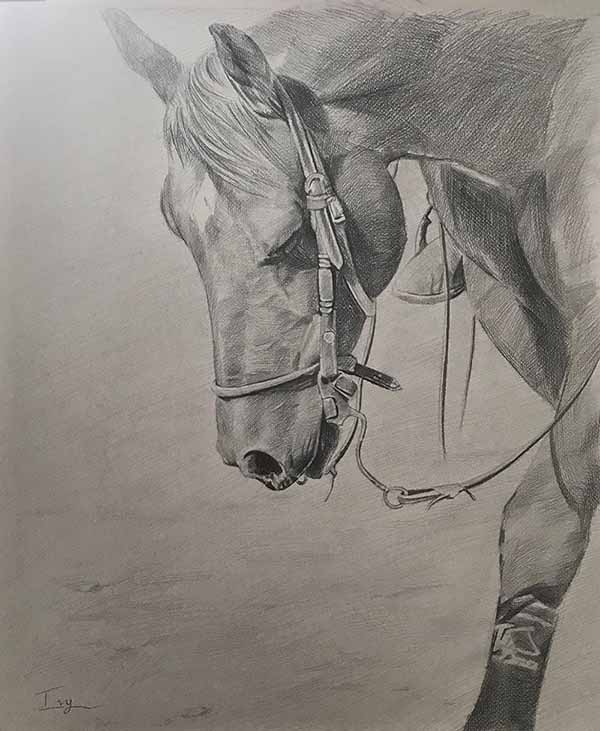 black white sketch charcoal black pencil horse