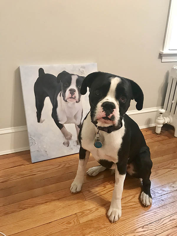 an oil painting of a black and white bulldog puppy