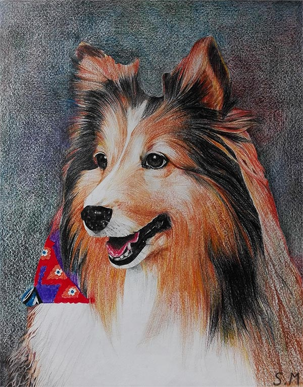 custom colored pencil drawing of a long haired dog
