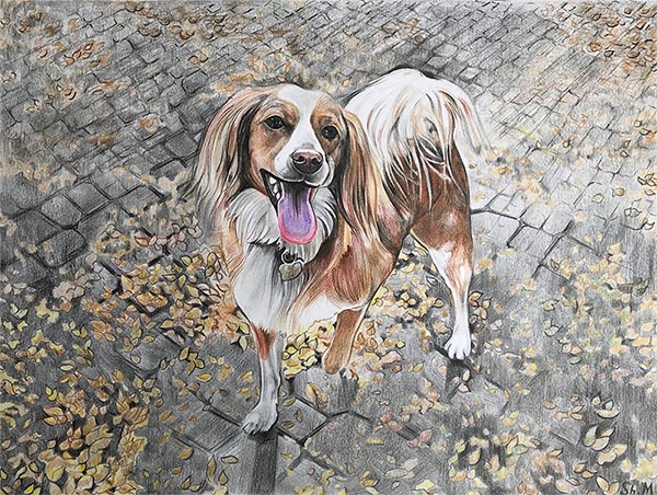 custom colored pencil drawing of a brown and white dog