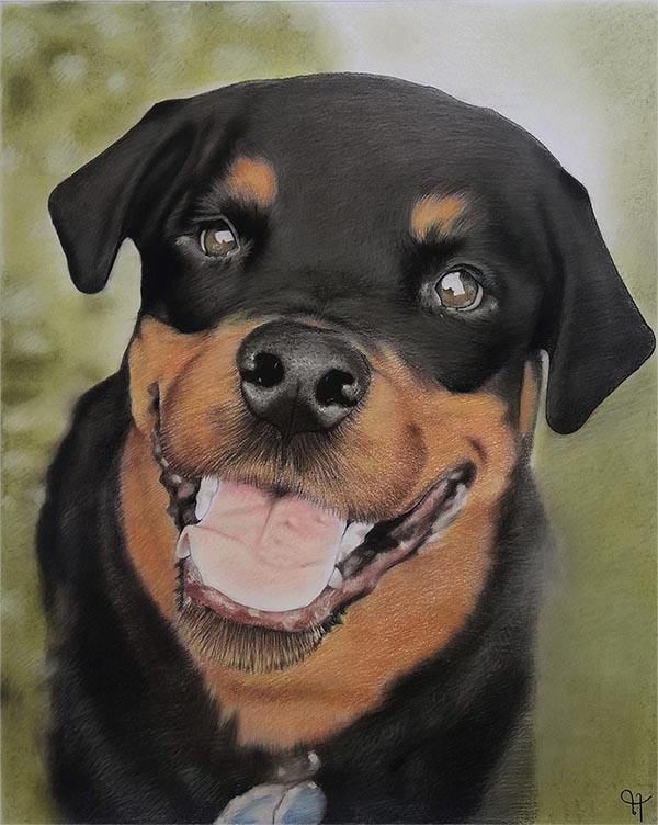 a pastel painting of a rotweiller