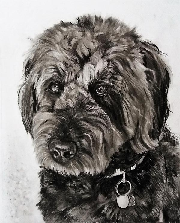 a charcoal drawing of a black poodle