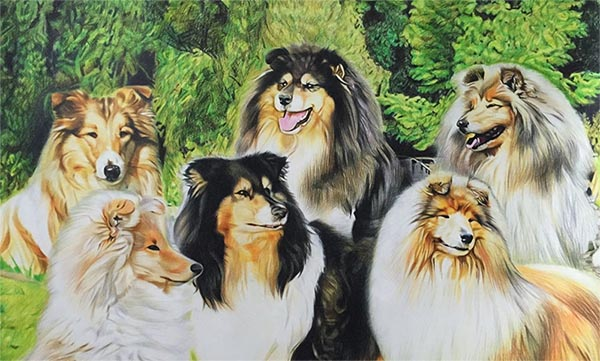 custom colored pencil collage of 6 Rough Collies