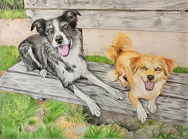 custom colored pencil drawing of two dogs on a bench