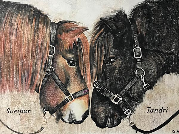 custom colored pencil drawing of two horses head to head