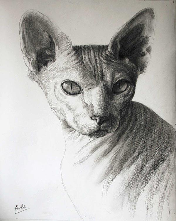 arte de gato