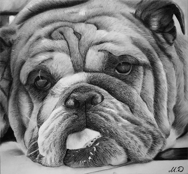 custom charcoal drawing of a dog