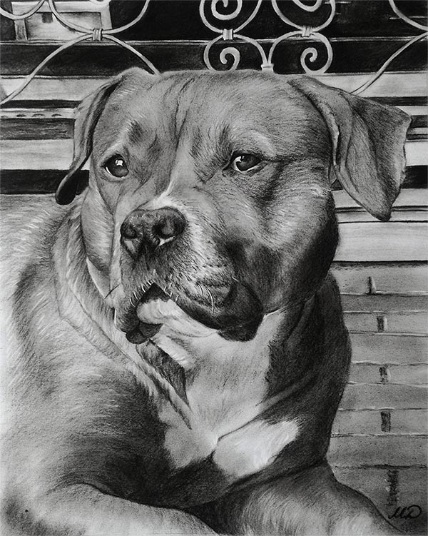 charcoal art of a dog