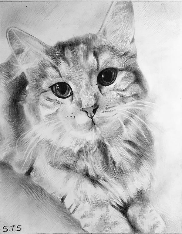 custom  pencil drawing of a kitten