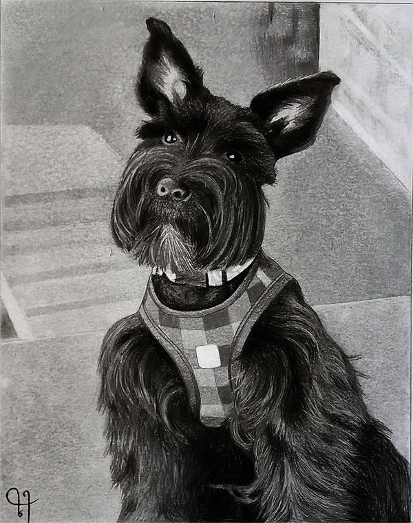 charcoal pet drawing