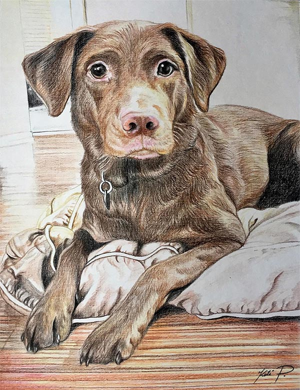 custom colored pencil drawing of brown puppy