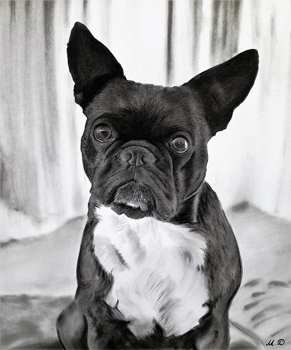 tête de chien en peinture