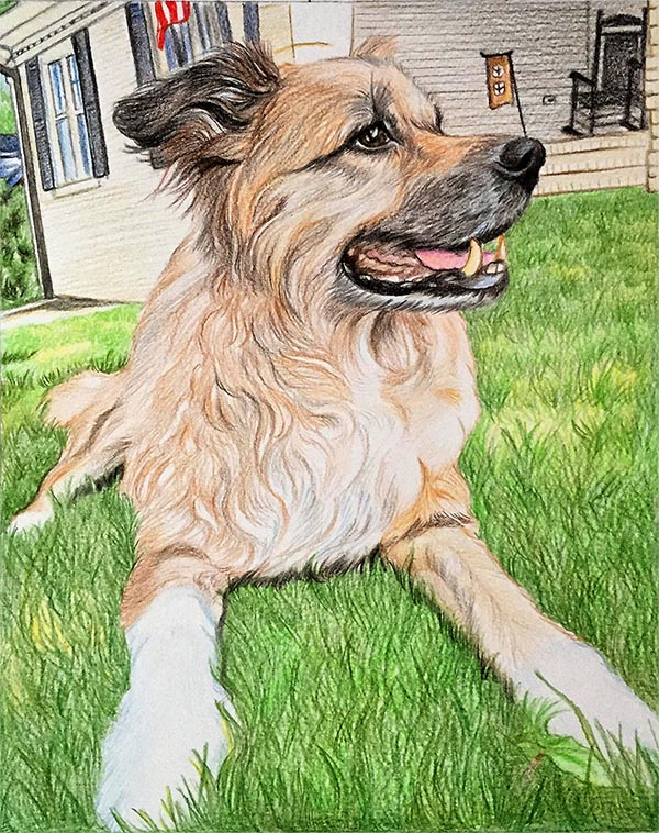 custom colored pencil drawing of a dog on the grass