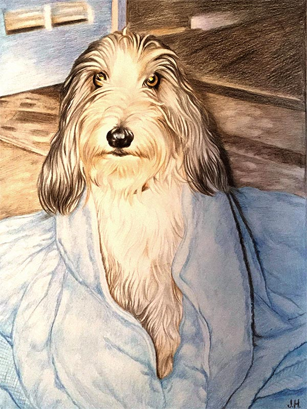 custom colored pencil portrait of a long haired dog