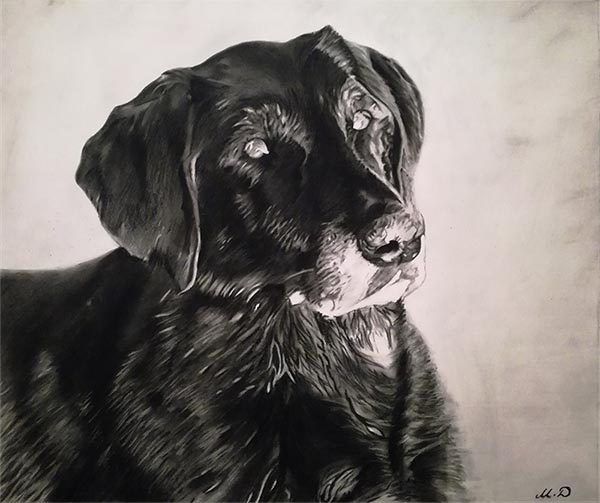 dog portrait online