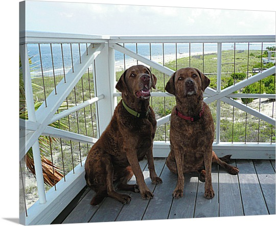 Photo of Two Attentive Dogs on Canvas