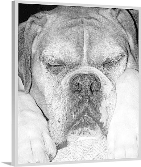 Pop Art Photo of Dog Asleep on Canvas