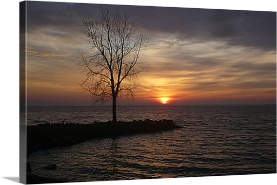Print of Tree in Sunset on Canvas